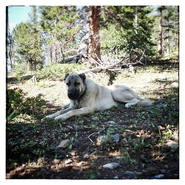 Taskin taking a break in the shade...