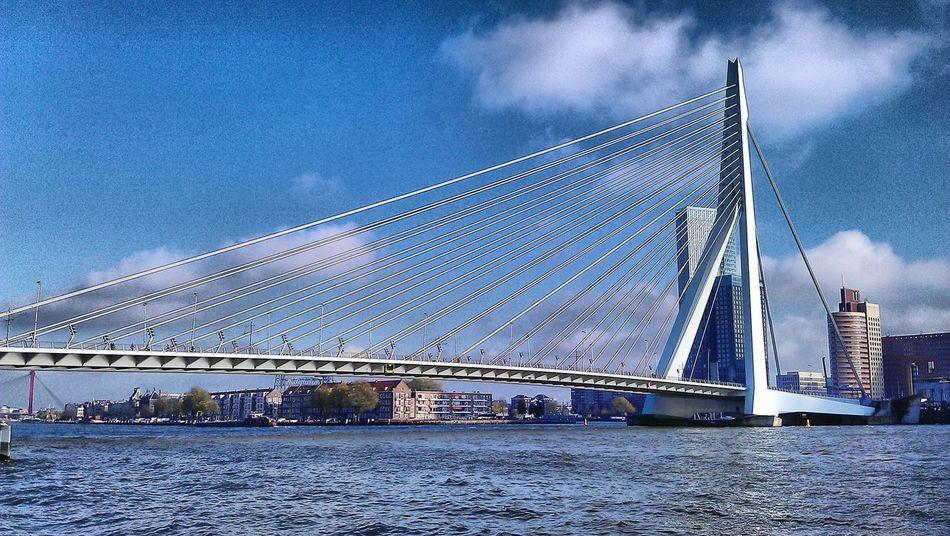 Rotterdam Erasmusbrug Haven Rotterdam