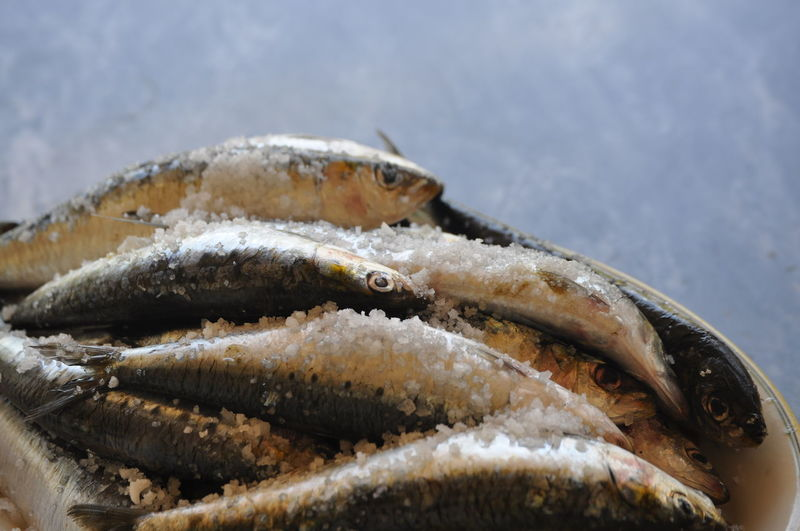 Sardines Fish Freshfish Portugal