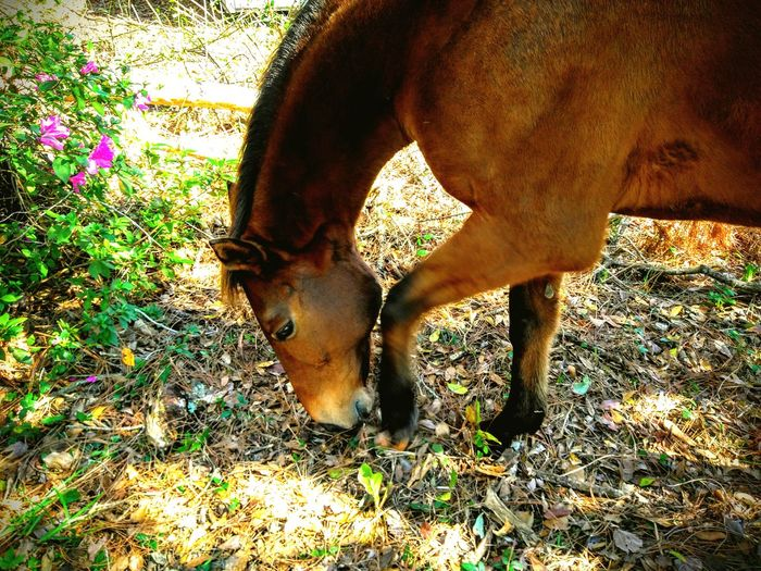 Horses My Paradise Meadows Animals No People Outdoors Domestic Animals On The Farm Country Life Chestnut Transportation Landscapes The City Light Long Goodbye The Secret Spaces Secret Garden Wildflowers The Great Outdoors - 2017 EyeEm Awards Florida Lost In The Landscape EyeEm Ready