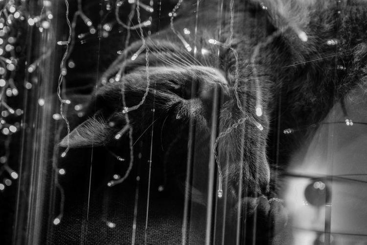 Animal Animal Themes One Animal Mammal Domestic Animals Domestic Pets Close-up No People Vertebrate Hair Animal Wildlife Cat Animal Body Part Focus On Foreground Feline Domestic Cat Animal Hair Nature Day Animal Leg Animal Head  Whisker