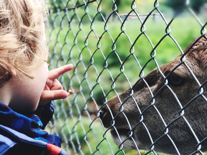 Close-Up Of Boy Pointing Against Fence