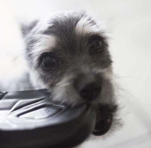 Little puppy Puppy Puppy Love Cachorro Perrito Tierno Cute Dog  Pet Mascota