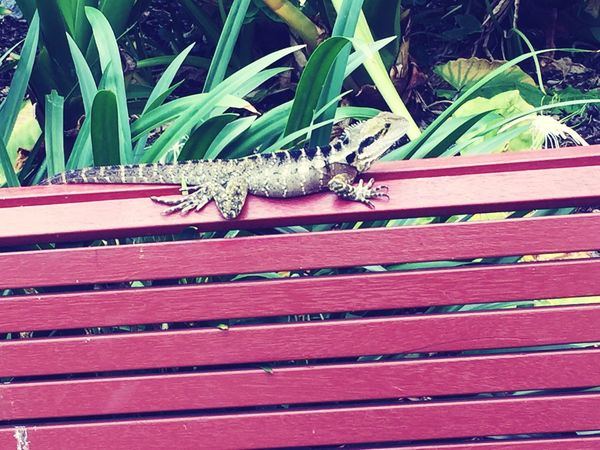 Found both these adorable creatures out sun baking early in the morning on the way to the academy 😍 Lizard Water Dragon