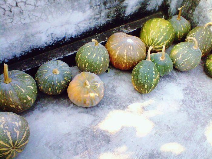 Pumpkin harvest kept on rooftop.Pumpkins Rooftop Pumpkinseason