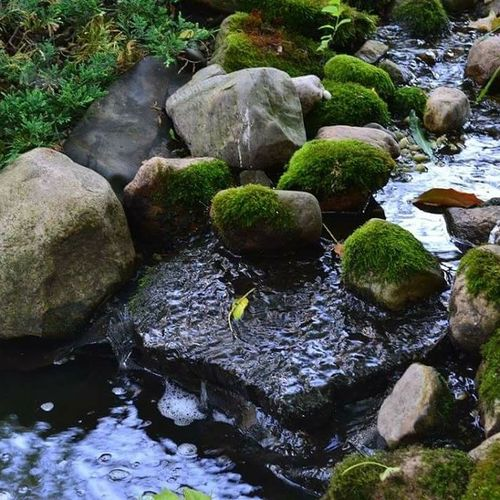Water Rock - Object Moss Nature Outdoors Pond Calm
