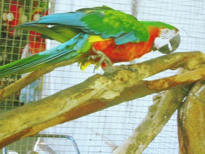 Bird Bird Photography Birds_collection Birds Of EyeEm  Animal Nature_collection Nature Zoo In Samutprakan Thailand