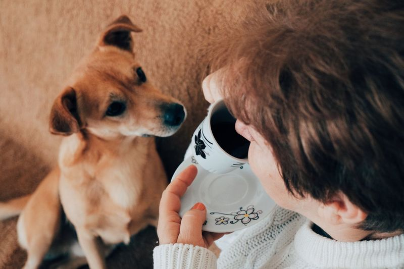 Woman Having Coffee With Dog At Home