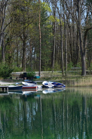 Tree Water Nautical Vessel Reflection Plant Mode Of Transportation Transportation Nature Day Forest Tranquility Beauty In Nature Lake Land No People Scenics - Nature Tranquil Scene Moored Outdoors WoodLand Rowboat Recreational Boat