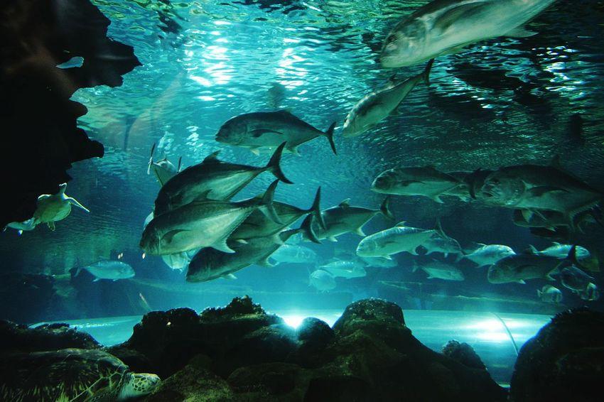 Cobalt Blue By Motorola Fish Ocean Sea Blue Water Nature Wildlife