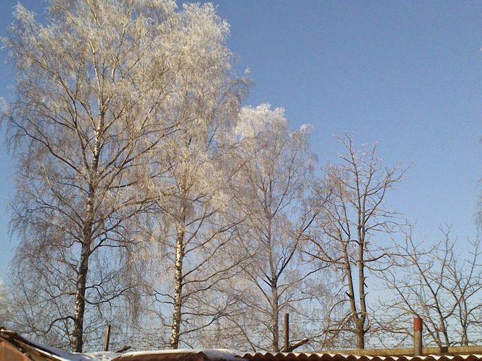 Утро в солнечный зимний день:-)
