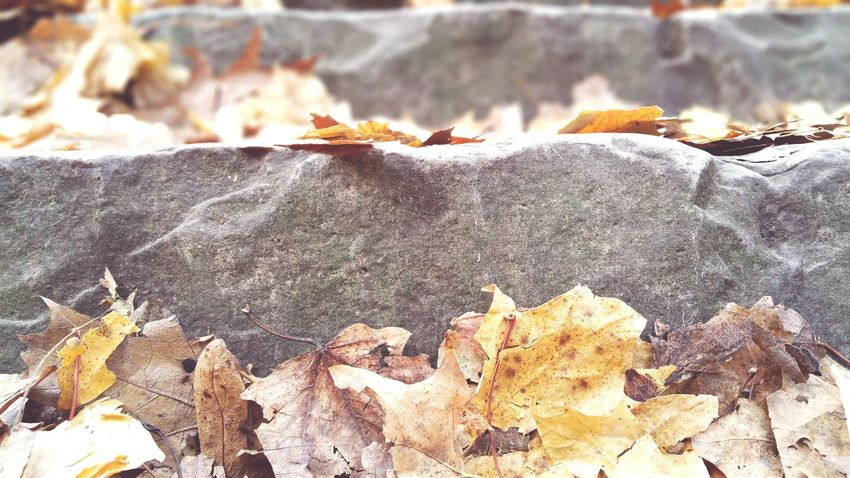EyeEm Selects Day No People Outdoors Nature Close-up Ground Level View Looking Up Autumn Leaf Dry Beauty In Nature Focus On Foreground Stepping Stone Steps Upward Steps In Nature Nature Built Structure Leaves 🍁 Leaves