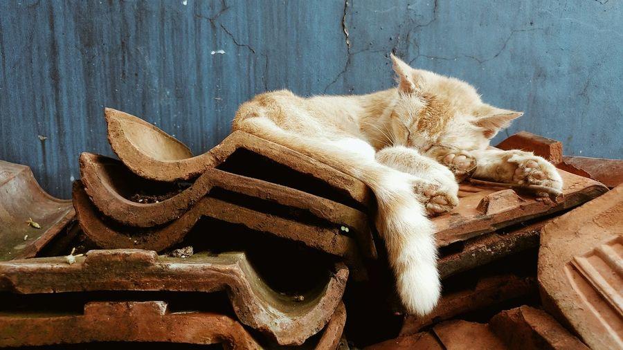 Cat Catsleep