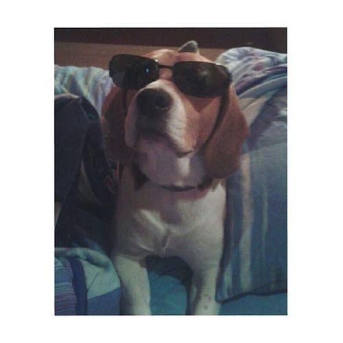 ErKing 💲Shaggy Beagle 🐶 ✌