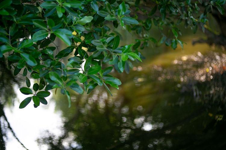 leaves Plant