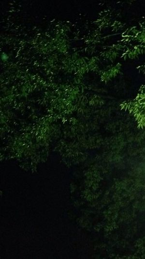 Night On The Planet Walking Alone... Summer2014 Japan 夜風3m/s お疲れ様でした。おやすみ世界。 EyeEm Nature Lover