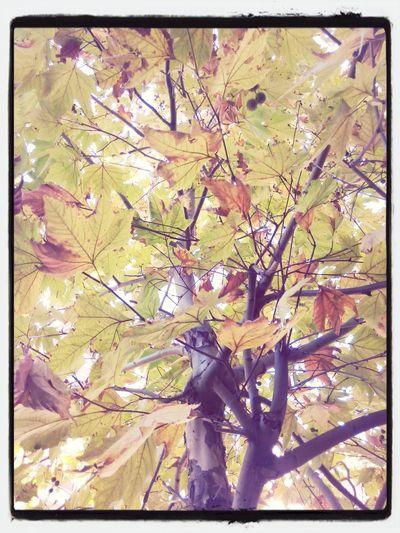 çınar Ağacı Just Pictured Huzur Verici
