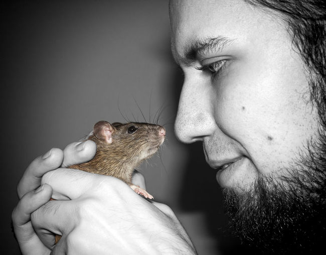 Love Domestic Animals Face Holding Love Pet Rat Rodent Symbiosis