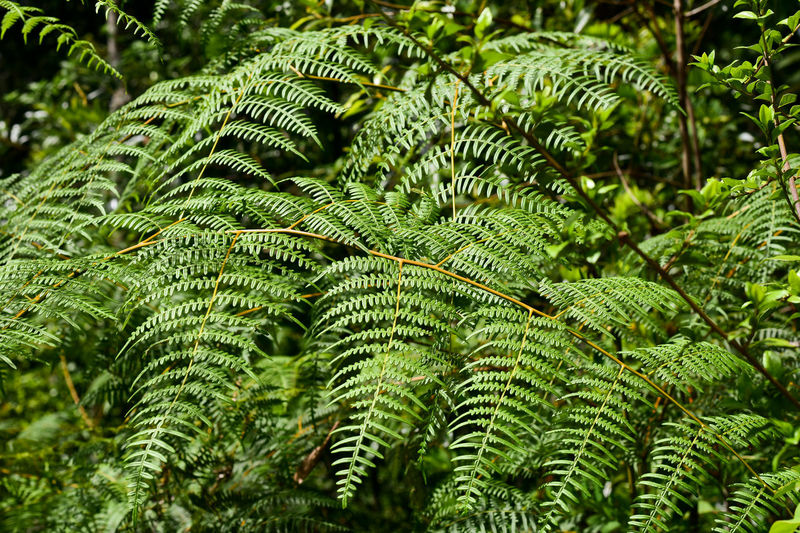 Close-up of fern leaves
