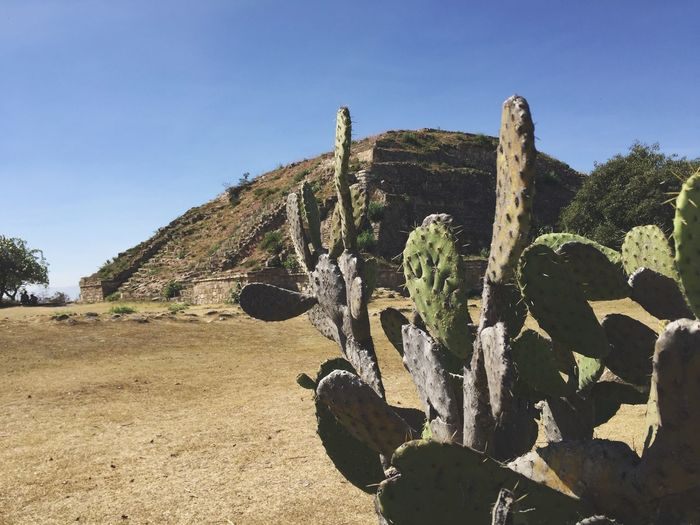 Desert Nature Blue Sky Scenics Landscape Tranquility Non-urban Scene Tranquil Scene Day Beauty In Nature Outdoors Growth Mountain No People Cactus Arid Climate Monte Alban Travel Destinations Oaxaca