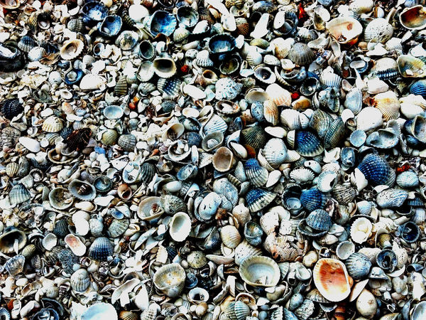 Rock No People Day Nature Outdoors Sandy Beach Seashore Rocky Shore Seashells Seashells, Rocks, Sand Abundance Directly Above Large Group Of Objects Backgrounds Variation Beach Choice Shell High Angle View Textured  Scattered