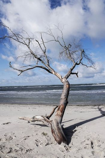 Sculpture Tree Sky Beach Water Land Tree Sea Cloud - Sky Nature Tranquility Horizon Horizon Over Water Scenics - Nature Beauty In Nature Sand Tranquil Scene Branch Day Plant Outdoors Dead Plant