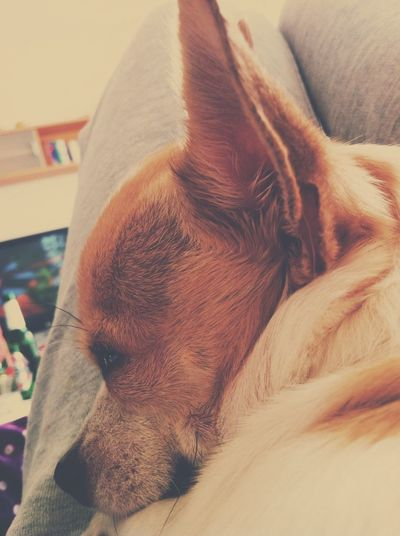 Dog Chillen ✌ Es Is So Heiß ?❤️