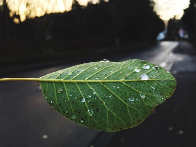 Leaf Drop Close-up Wet Water Focus On Foreground Nature Green Color Outdoors Growth RainDrop No People Beauty In Nature Freshness Day EyeEmNewHere EyeEm Ready