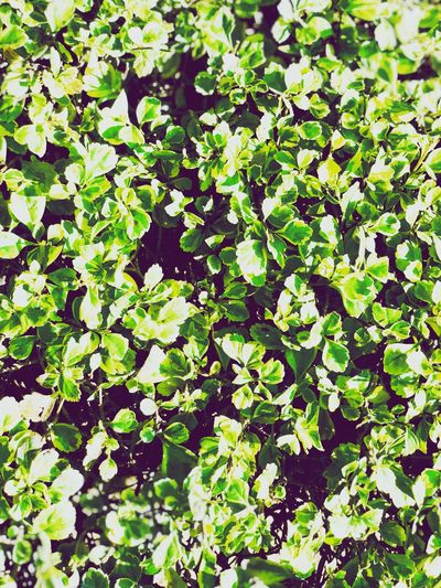 Green Color Leaf Growth Outdoors Plant Day Nature