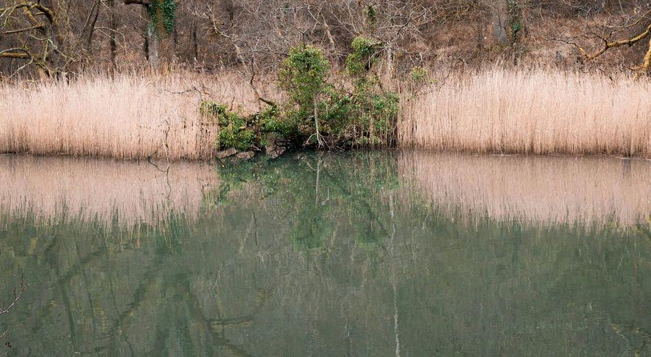 Ponds Pondreflection Reeds ReedNation Water Reflections Reflections Color Reflections