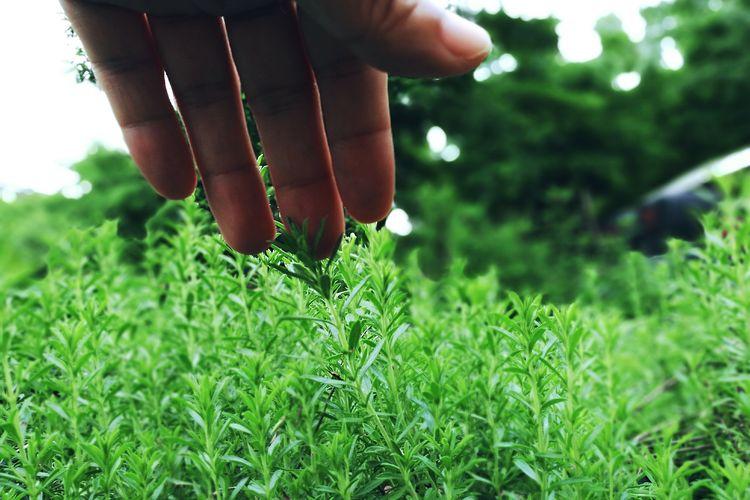 Close-up of man hand holding grass
