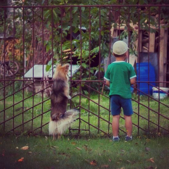 Animal Themes Rear View Dodgers Kid And Dog Kid And Pet Standing Dog Through The Fence Curious Dog Curiosity Curious Kid What's There? Green Theme Green Dodge People And Places Long Goodbye