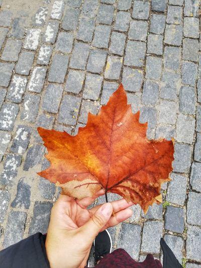 Autumn//