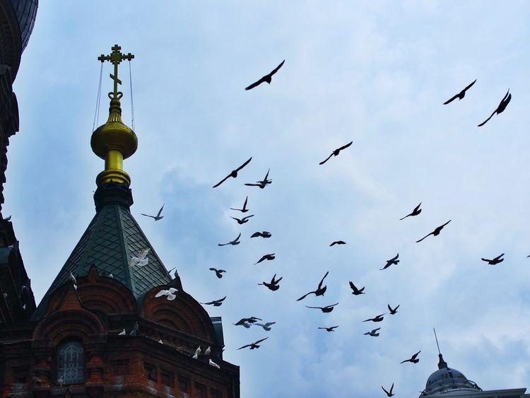 圣索菲亚教堂 Flying 哈尔滨 Church
