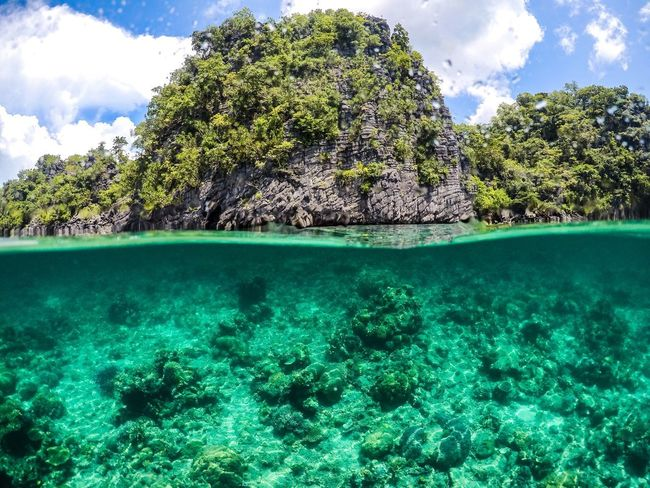 Split paradise Island Coron, Palawan Palawan Split Photograph Water Tree Plant Sea Nature Day Underwater Turquoise Colored Beauty In Nature Tranquility UnderSea Scenics - Nature Clean Green Color EyeEmNewHere
