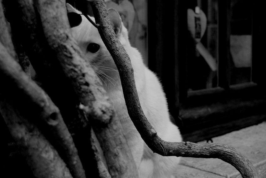 Animal Skin Animal Themes Cat Cat Lovers Hidden Hiding Hiding From The Camera Portrait
