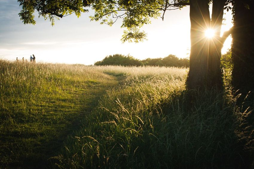 Tree Sunlight Nature Grass Outdoors Field Tranquility Sun Beauty In Nature Day Sunset Southdowns Southcoast