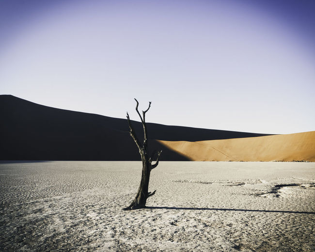 Mid level picture of a lone dead tree in Doodvlei Namibia on the salt pan. Arid Climate Beauty In Nature Clear Sky Climate Copy Space Day Dead Plant Desert Environment Land Landscape Mountain Nature No People Non-urban Scene Outdoors Scenics - Nature Sky Sunlight Tranquil Scene Tranquility Tree