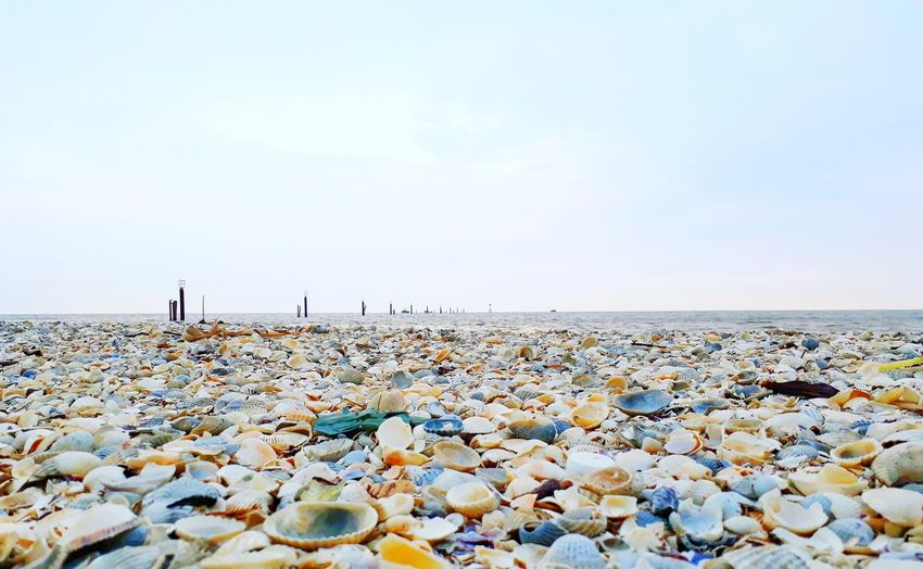 seashells at the seashore Seashells Seashore Beach Water Sea Pebble Beach Beach Low Tide Pebble Groyne Sand Sunset