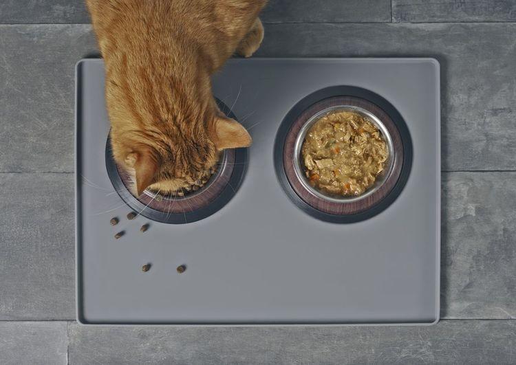 Cat Nutrition -