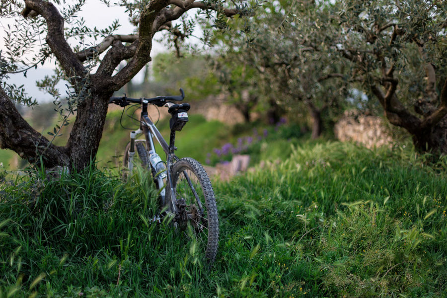 When I can, after work, I take my bike and I go to the hills. I love nature. The fresh air and the calm vibes relax me as soon as I take a breath. Activity Adventure After Work Bicycle Cycling Flower Flowers Flowers,Plants & Garden Forest Freedom Gravel Road Hills Italy Landscape Mountain Bike Nature Outdoors Relaxing Sport Spring Tree Valpolicella Wheel