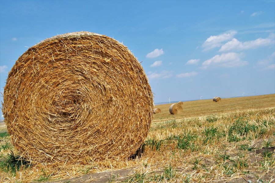 Agriculture Bale  Basilicata, Italy  Beauty In Nature Blue Farm Field Fields Of Gold Fieldscape Grassy Hay Horizon Over Land Landscape Natura Naturaleza Nature No People Outdoors Rural Scene Scenics Sky Solitude Summer Tranquil Scene Tranquility