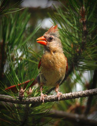 bird Bird