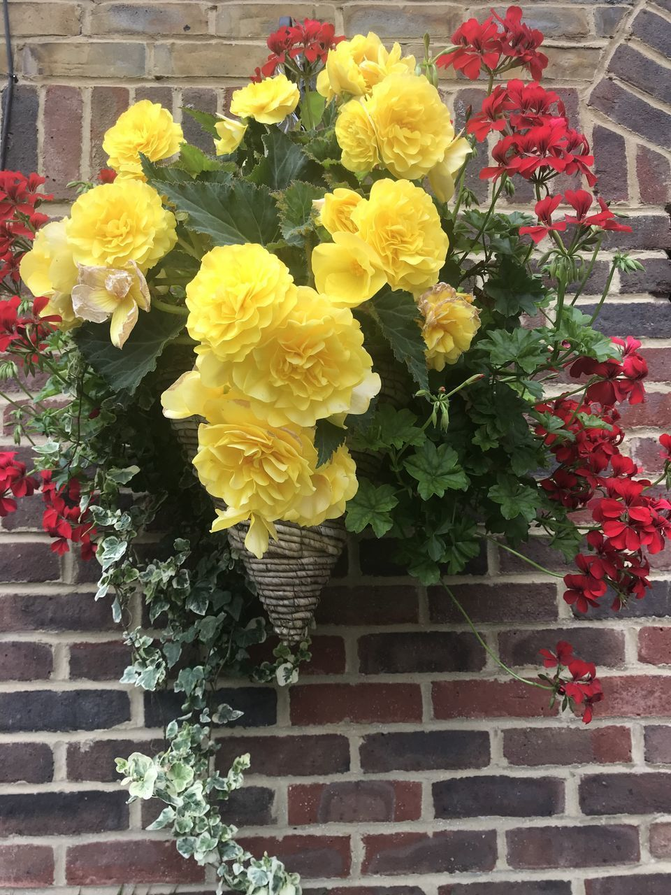flower, flowering plant, plant, beauty in nature, yellow, freshness, vulnerability, fragility, growth, nature, petal, flower head, inflorescence, architecture, no people, day, close-up, built structure, outdoors, multi colored, flower arrangement, brick, bouquet, flower pot, lantana