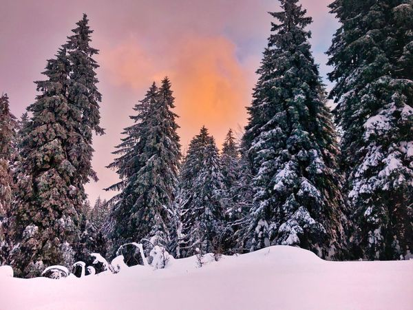 Winter Snow Cold Temperature No People Tranquility Nature Beauty In Nature Tree Tranquil Scene Weather Sky Scenics Outdoors Day