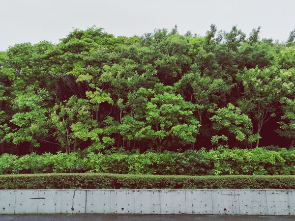 Tree Green Color Growth No People Nature Agriculture Outdoors Day Plant Beauty In Nature Sky Beauty In Nature Nature Arts Culture And Entertainment Parks Outdoor Photography Crowd Architecture Foest🌳 Forest