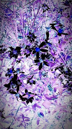 Flowers Of A Different Veiw playing with filters Color Chrome World Pinks And Purples A Little Touch Of Black Flowers As I See Them Flower Photography Light And Shadow