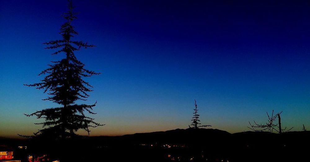 #Blue #evening #pine Tree #Shadow #sky #TURKEY/Kocaeli