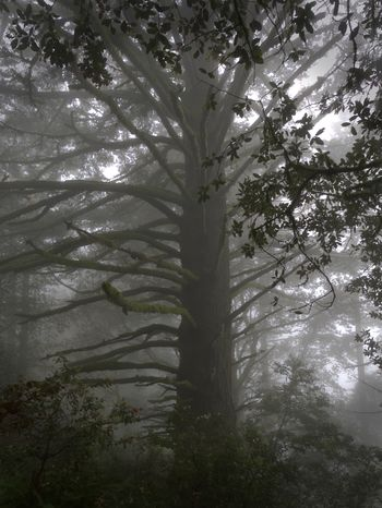Foggy Forest Mystic Beauty In Nature Branch Foggy Forest Growth Hike Nature No People Outdoors Tranquil Scene Tree Tree Trunk