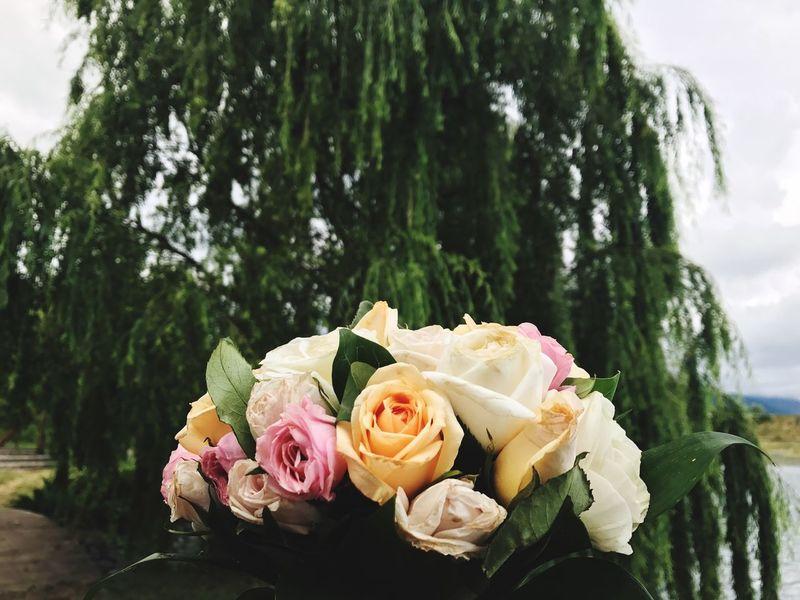 Flower Wedding Rose - Flower Bouquet Life Events Bride Celebration Wedding Ceremony Petal Beauty In Nature Freshness Flower Head Flower Arrangement Nature Day Close-up Focus On Foreground Wedding Cake Celebration Event Love Colour Your Horizn